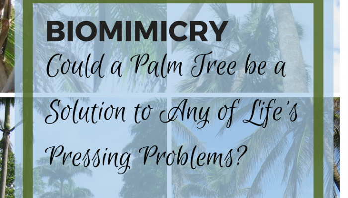 Biomimicry: Could a Palm Tree be a Solution to Any of Life's Pressing Problems?