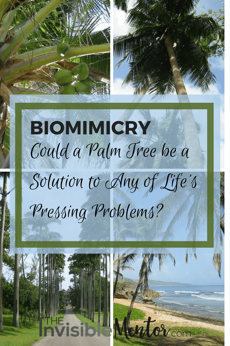 Biomimicry, collage of coconut and other palm trees