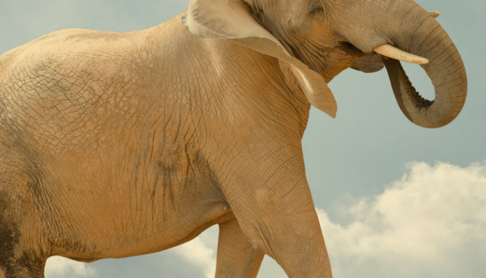 5 Business Lessons from the Circus