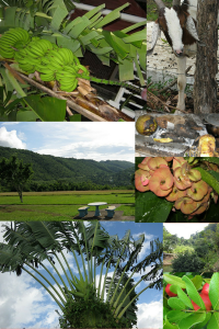 Collection of Photos Avil Took While in Jamaica